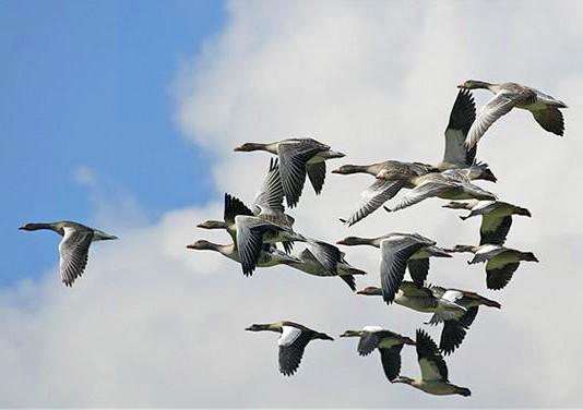 Vogelzwerm op kaart